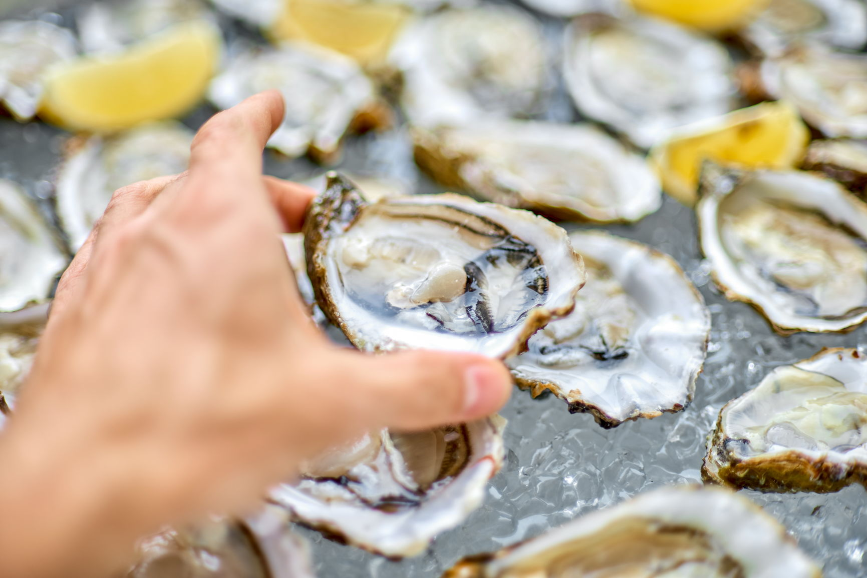 oysters are good for your immune system